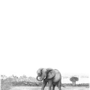 Elephant's Eye Pencil Drawing | Bowen Boshier Pencil Artist