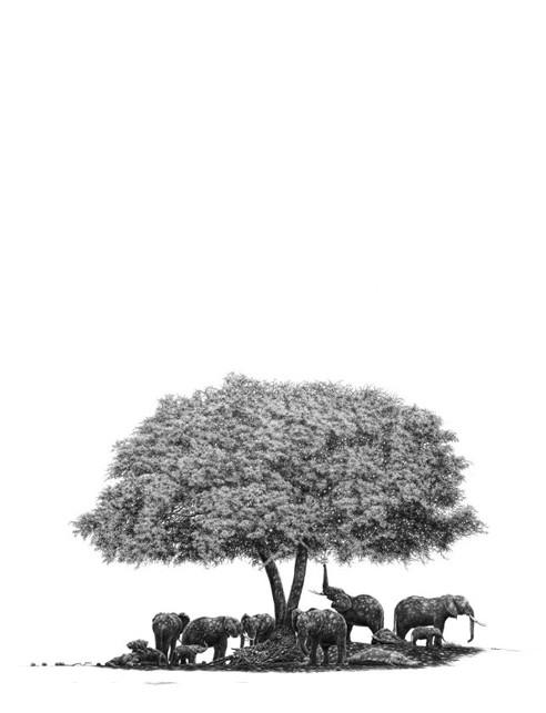 Haven | Pencil Drawing by South Africa's Bowen Boshier